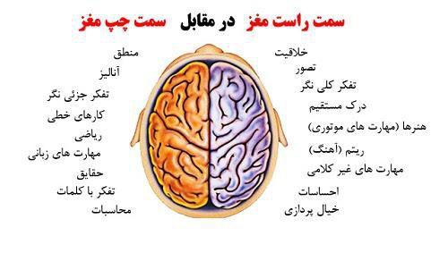 سناریو نویسی و نیمکره های مغز